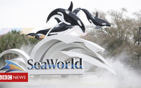 105380467 gettyimages 97030782 - SeaWorld Orlando orca whale Kayla dies after illness
