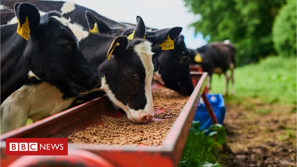 103399855 cows getty - UK farmers promised 'no deal' protection