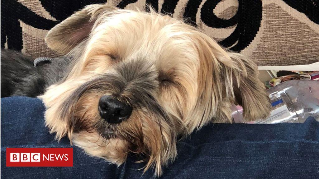 105593107 hi052222717 - 'Brain tumour' dog in Inverness had 7cm needle in neck