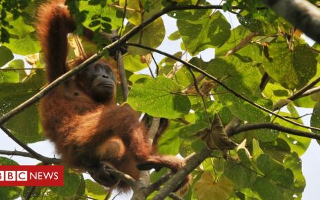 105600998 35233f3f 9d01 4f7b bf78 9a842f946e0b - Supermarkets' sustainable palm oil not fully traceable
