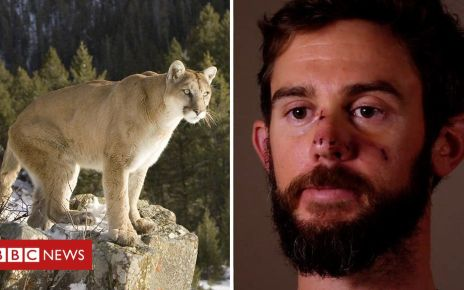 105670350 p0711n0q - Hiker has brush with death after wrestling vicious cat
