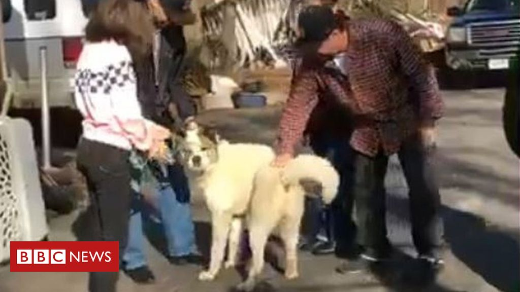 105730587 capture2 - Camp Fire: Dog missing from Paradise wildfire found after 101 days