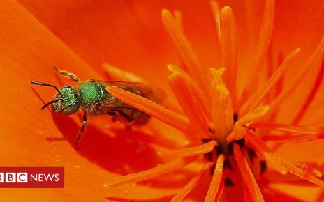 106376898 mediaitem106376897 - Taiwan doctor finds four sweat bees living inside woman's eye