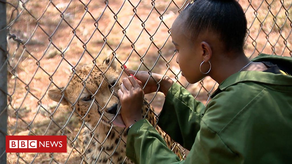 106415444 p0766gk8 - Teen conservationist: 'Why I adopted a cheetah'
