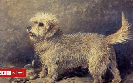 106622697 callumbyjohnemms - Dandie Dinmont: The dog with a £2m art legacy