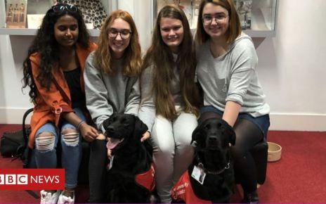 106640416 dogs2 - Stress-busting dogs on university staff