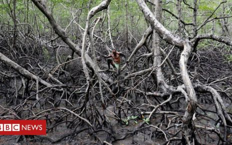 107184471 54463358 0a4a 4d7c 94f1 0e180f8f7adc - Fishing for crabs in Brazil's mangrove forests