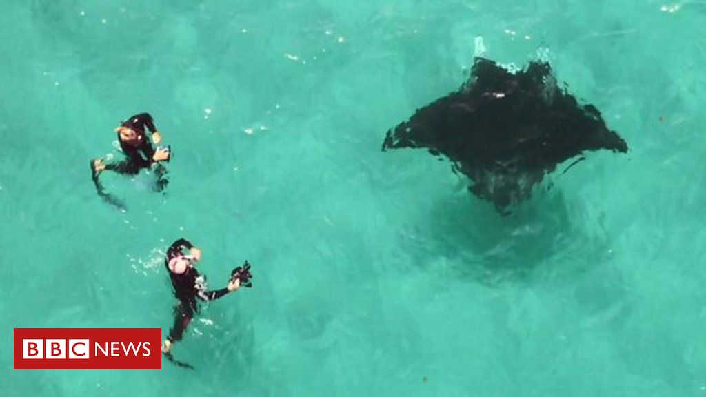 107855447 p07grs3v - Manta ray in distress helped by divers