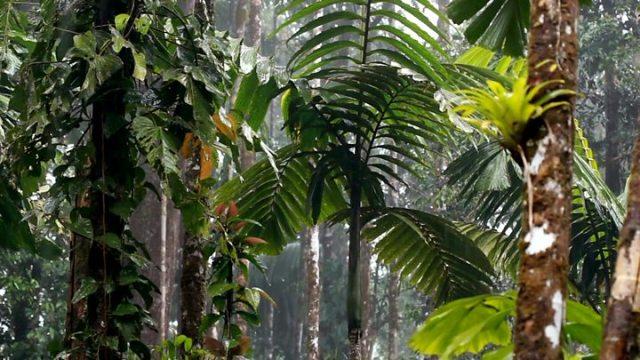 1566667907 882 Amazon fires Fines for environmental crimes drop under Bolsonaro - Amazon fires: Fines for environmental crimes drop under Bolsonaro