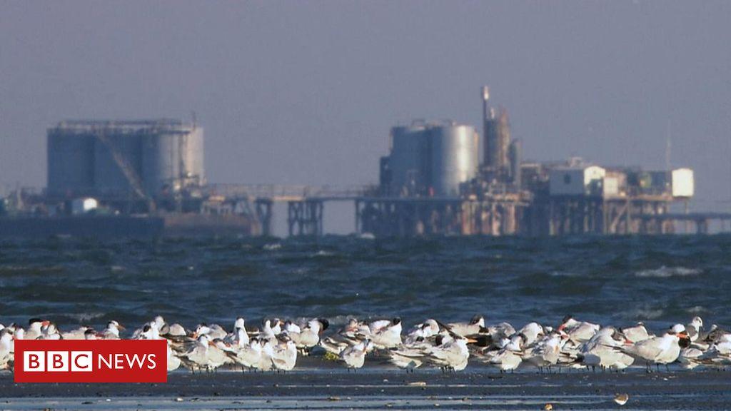 108870800 mediaitem108870799 - Bird populations 'in global crisis'