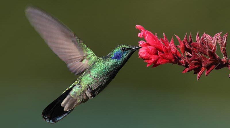 Inspiração colibri!