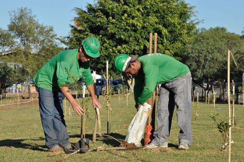 Construtora contribui para cidades mais arborizadas