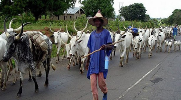 Knocks and Kudos for Cattle Rail in Nigeria