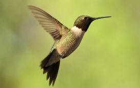 Hummingbird's Heroism and the Angry Scar on Global Conscience Called Africa