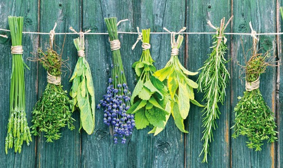 250 Ideas for Cooking with 10 Fresh Herbs