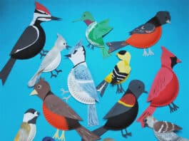 paper plate bird crafts collection