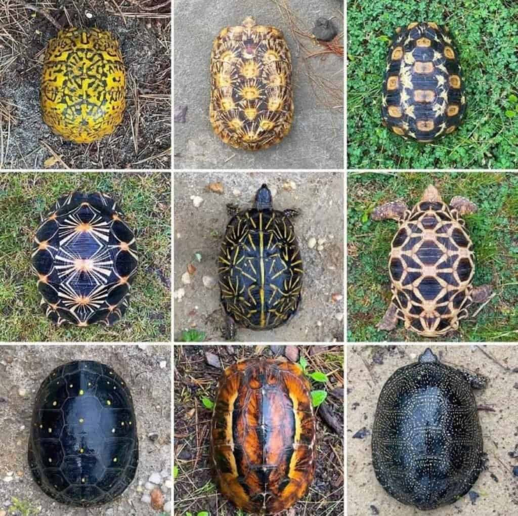 turtle shell images