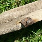 Australian bush carpentry oar