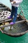 traditional, boats, matt atkin, hanoi, vietnam, photographs