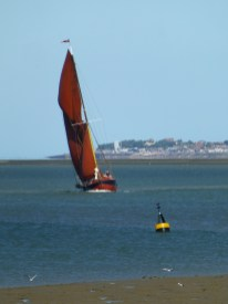 Swale match 2013 17 sailing barge Repertor