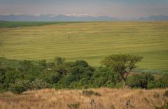 Mountain bikers got to enjoy some green views on the final stage of the Berg and Bush 'Great Trek'.