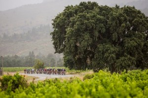 A scenic view of cyclists during the Stellenbosch Cycle Tour.