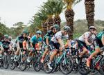 A bunch of cyclists in action during stage two of the Tour Down Under. Photo: Chris Auld/Tour Down Under