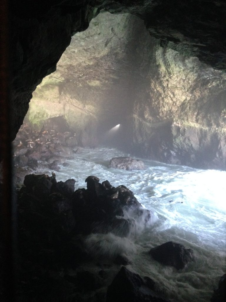 Sea Lions Cave Florence Oregon