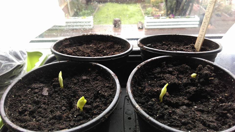 Setting off the seeds