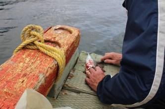 Makrele filitieren
