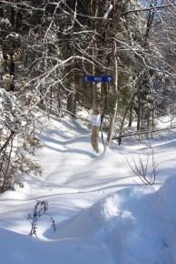 Côte de Salzbourg – Wood-Trail