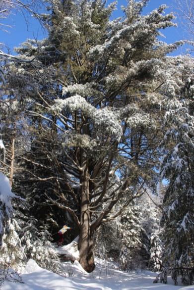 Côte de Salzbourg – Tatjana schubst Bäume um