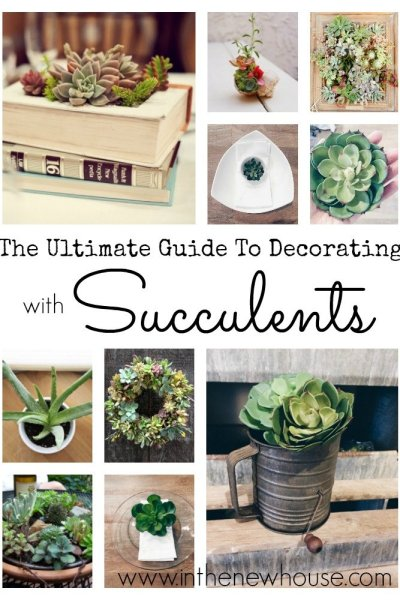 The Ultimate Guide To Decorating With Succulents