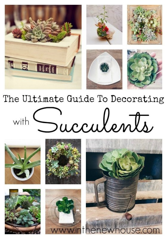 The Ultimate Guide To Decorating With Succulents featuring pro tips from Taylor at Sugar and Succulents