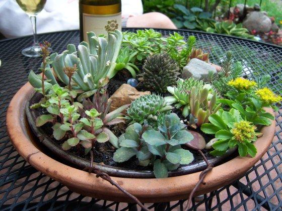 Plant an outdoor succulent garden