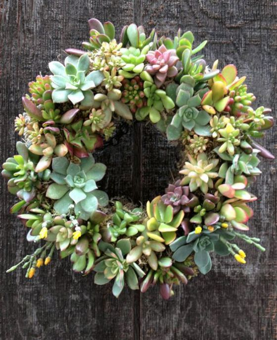 The prettiest way to display succulents is in a wreath