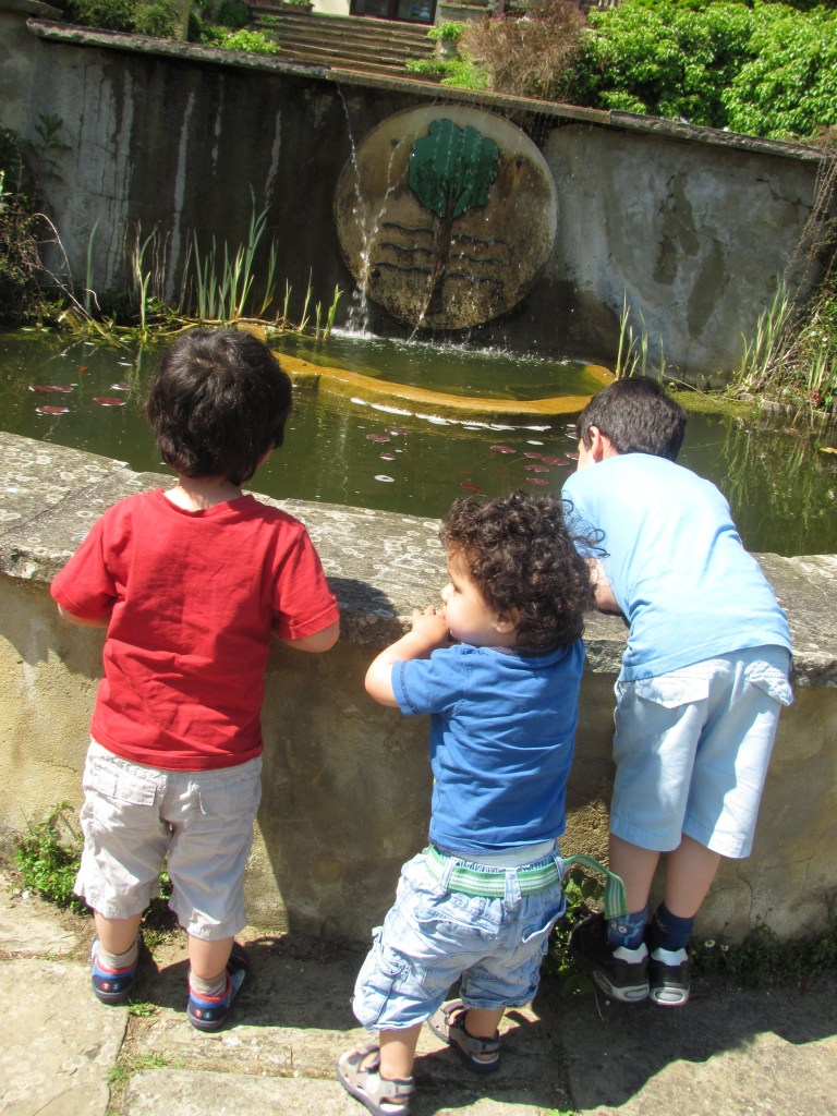 three boys looking into a fish pond