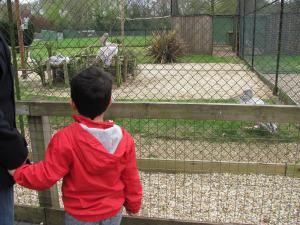 paultons park zoo