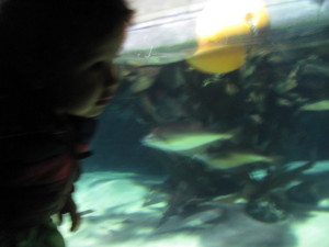 baby at london aquarium