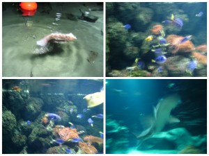 collage of pictures from the london aquarium sealife centre on the southbank