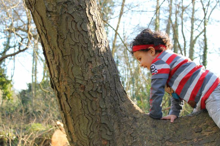 climbing trees at denham country park