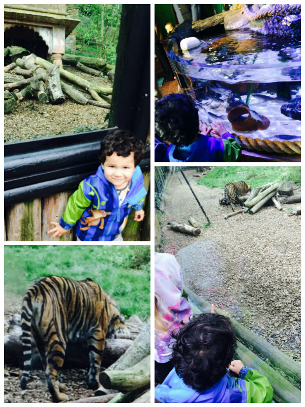 visiting the zoo and aquarium at chessington