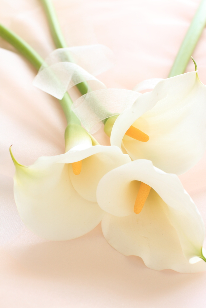 Calla lilly wedding flowers
