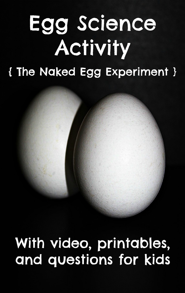 Egg science experiment. How to make a bouncy egg aka the naked egg experiment. Learn about dissolving egg shells in different liquids