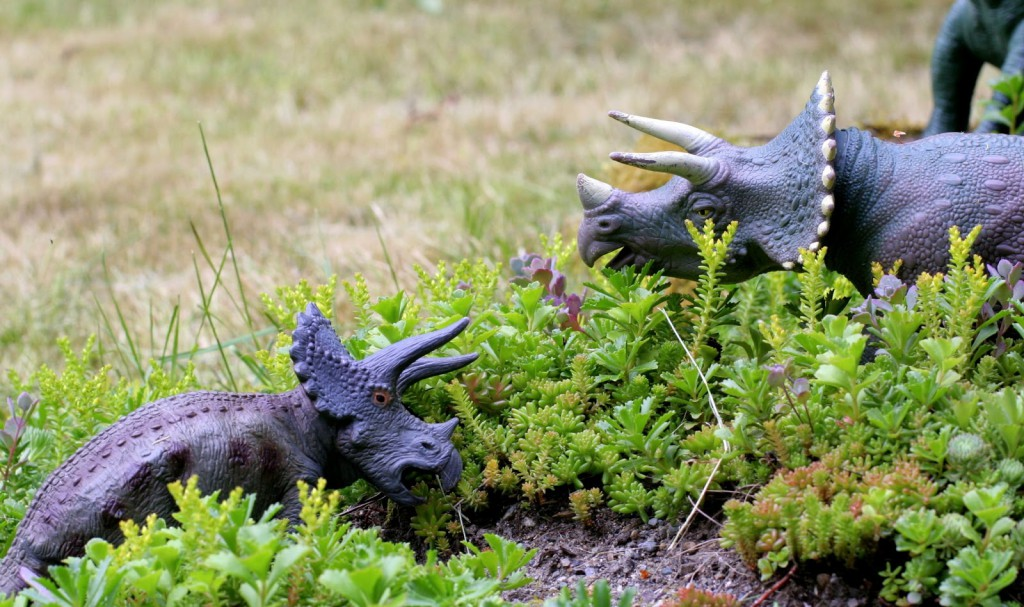 not a fairy garden but a dinosaur garden from fun at home with kids