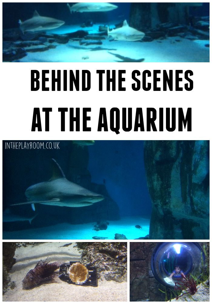 Behind the scenes at the london aquarium