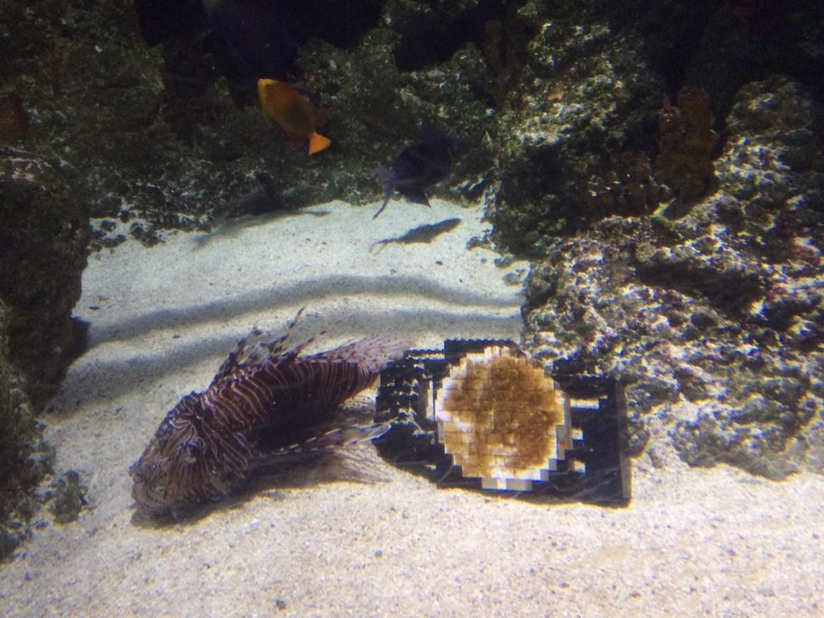 lego trail at the london aquarium