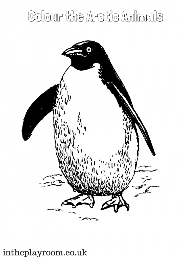 colour the arctic animal, penguin colouring page for kids
