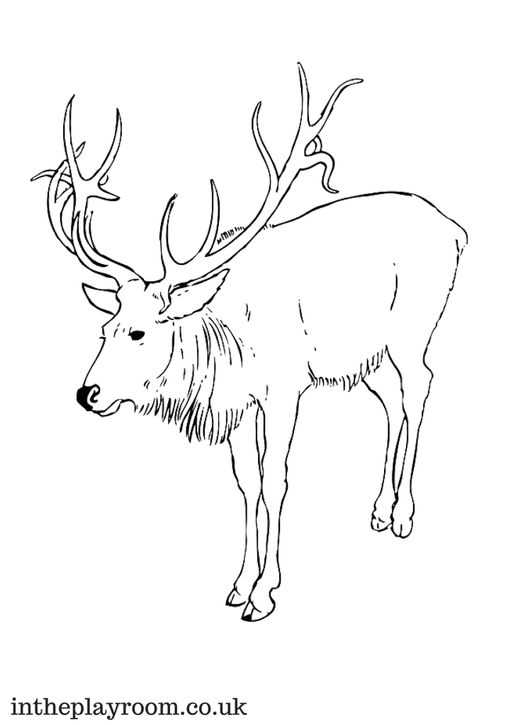 reindeer colouring page