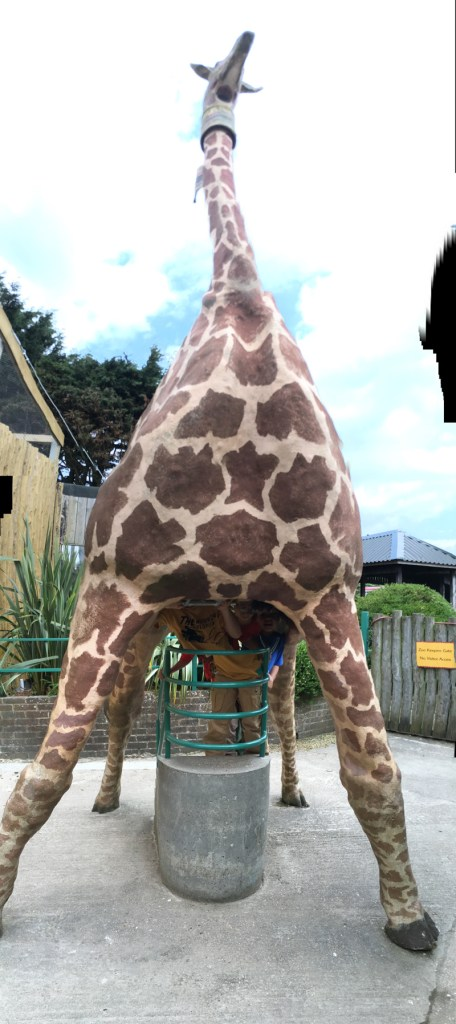 giraffe periscope at drusillas